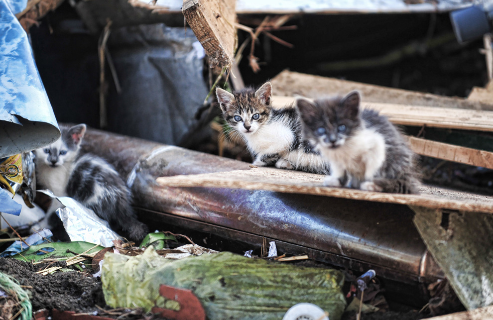 chile tsunami kittens in house debris
