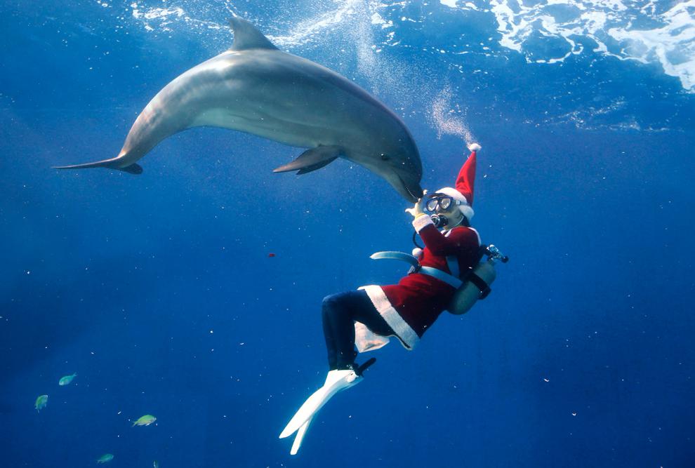 CAPTAIN TAREK DREAM: 2012 Christmas approaches celebrations all over ...