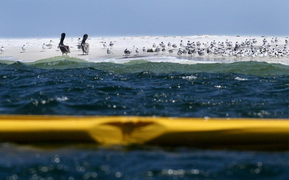 Một số hình ảnh về vụ tràn dầu tại vịnh Mehico>>Khủng khiếp D01_23207927