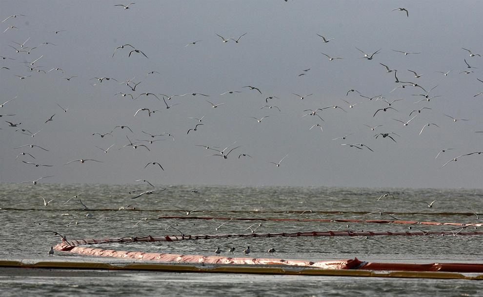 Một số hình ảnh về vụ tràn dầu tại vịnh Mehico>>Khủng khiếp D29_23214605