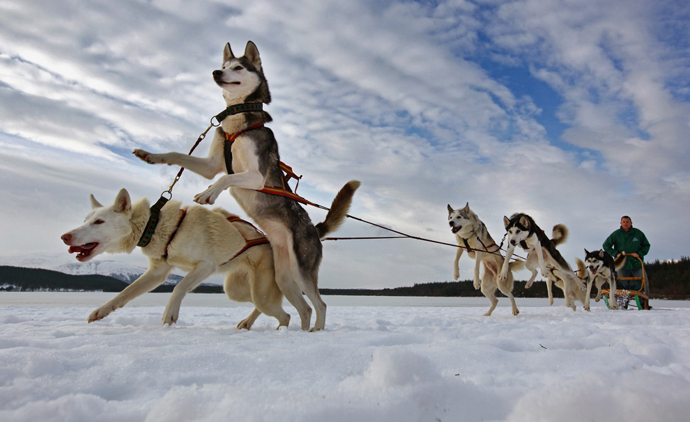 Dogs and sleds - Photos - The Big Picture - Boston.com