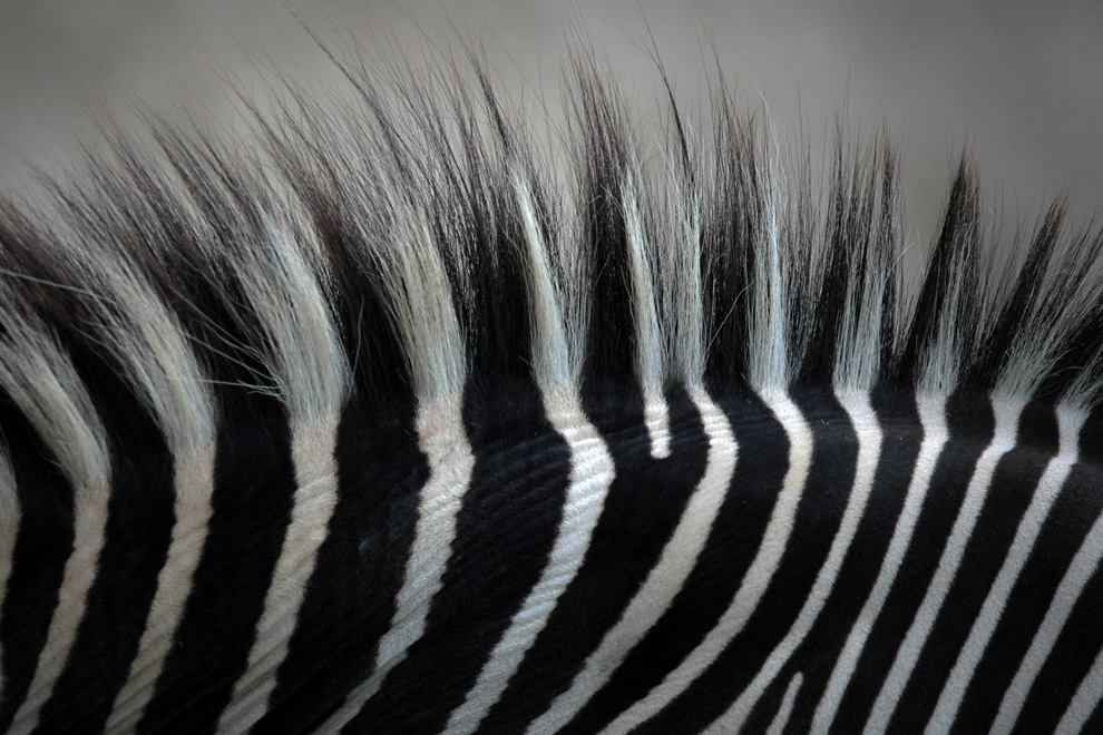 black and white striped background. Black, with white stripes - or