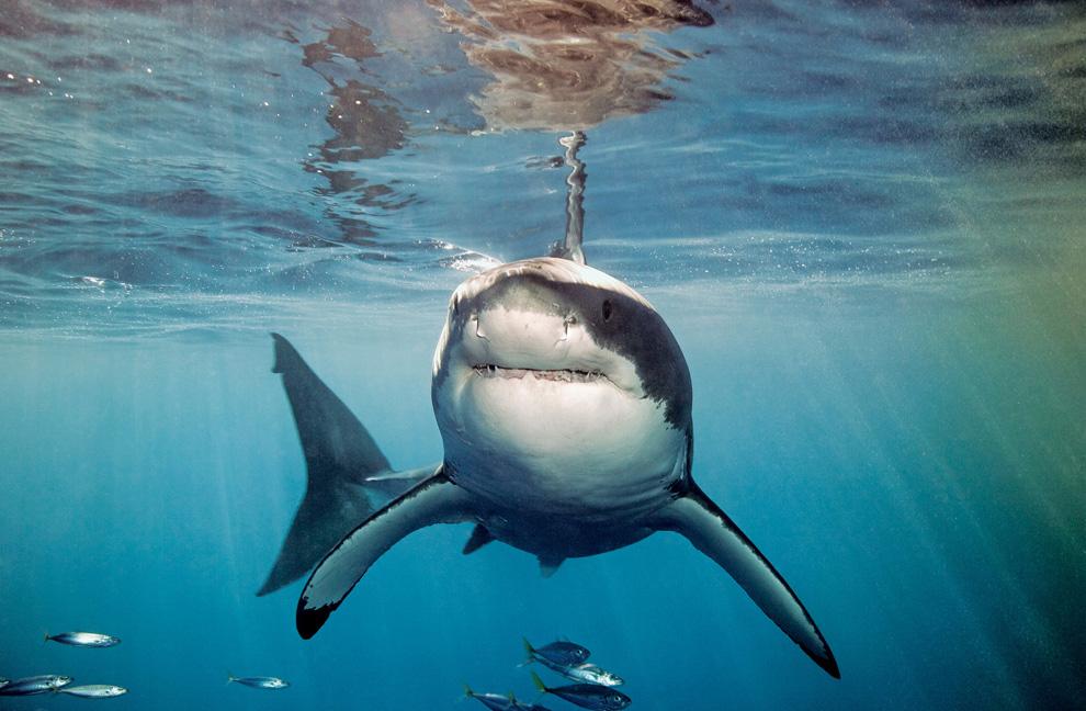 hermosas fotografías de animales HD