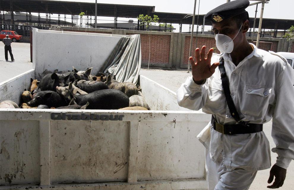 Египетский полицейский в защитной маске стоит у грузовика полного свиней у главной скотобойни в Каире, 30 апреля 2009. Власти Египта распорядились в короткое время уничтожить около 350 тысяч свиней страны, в целях предупреждения распространения вируса свиного гриппа. Представители ООН назвали такие радикальные меры совершенно ненужными. (REUTERS/Asmaa Waguih)