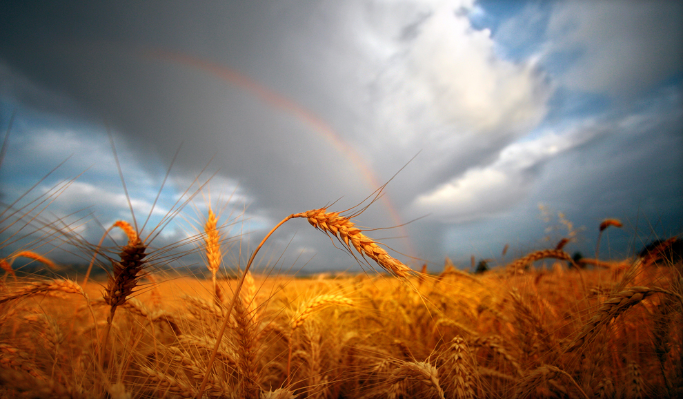 Free Images : nature, sunrise, sunset, field, wheat, sunlight ...