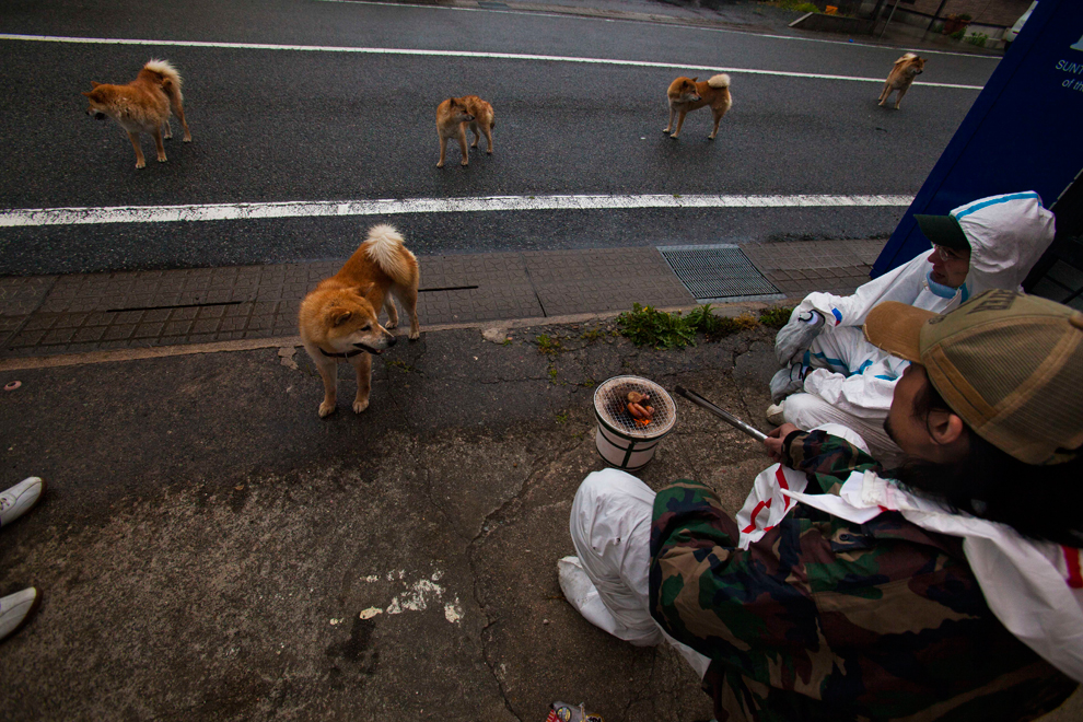 National Animal of Japan http://www.boston.com/bigpicture/2011/12/japans_nuclear_exclusion_zone.html