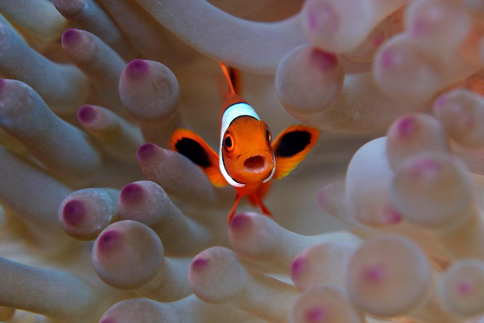 vida marina es rica en las aguas indonesias de Raja Ampat entre los océanos Pacífico y la India
