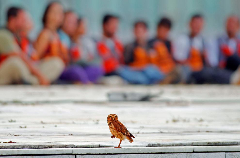 bp38 [Photo] 50 bức ảnh thiên nhiên tuyệt đẹp 2011