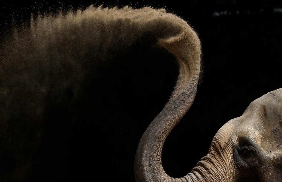 elefante asiático aerosoles de arena en su recinto en el zoológico de Karlsruhe