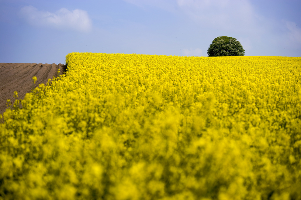 bp44 [Photo] 50 bức ảnh thiên nhiên tuyệt đẹp 2011