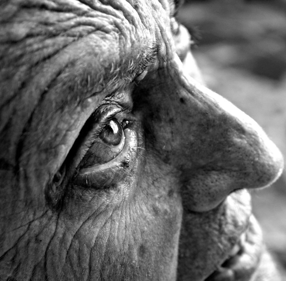 A Wrinkle in Time. Beauty is in the eye of the beholder. (Photo and caption by Nikki Krecicki)