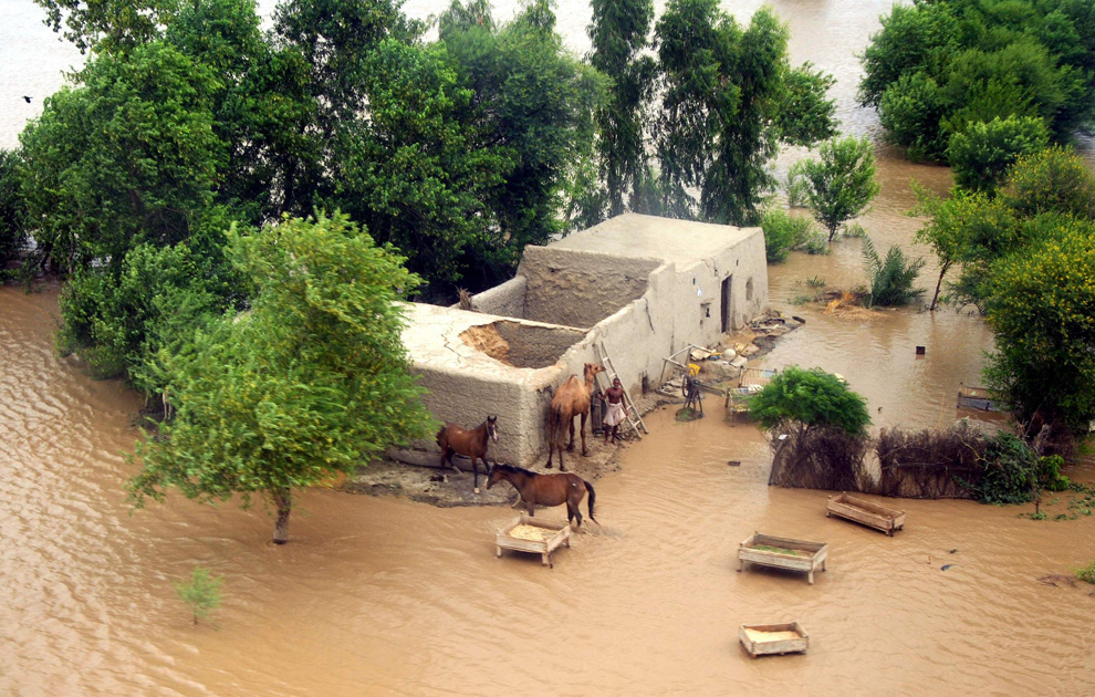 An aerial view of a man and his animals surrounded by floodwater in Taunsa near Multan, Pakistan, flooded on Sunday, Aug. 1, 2010. (AP Photo/Khalid Tanveer)