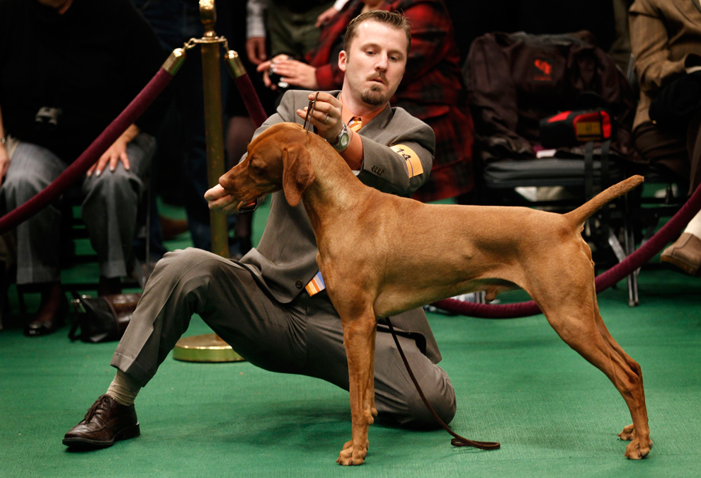 Six New Breeds National Dog Show