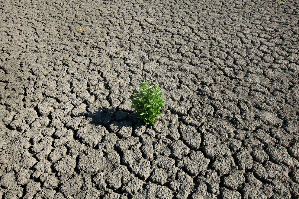 A weed grows out of the dry cracked bed of O.C. Fisher Lake on July 25 in San Angelo, TX. The 5,440 acre lake which was established to provide flood control and serve as a secondary drinking water source for San Angelo and the surrounding communities is now dry following an extended drought in the region. The lake which has a maximum depth of 58 feet is also used for boating, fishing and swimming. The San Angelo area has seen only 2.5 inches of rain this year. The past nine months have been the driest in Texas since record keeping began in 1895, with 75% of the state classified as exceptional drought, the worst level. (Scott Olson/Getty Images)