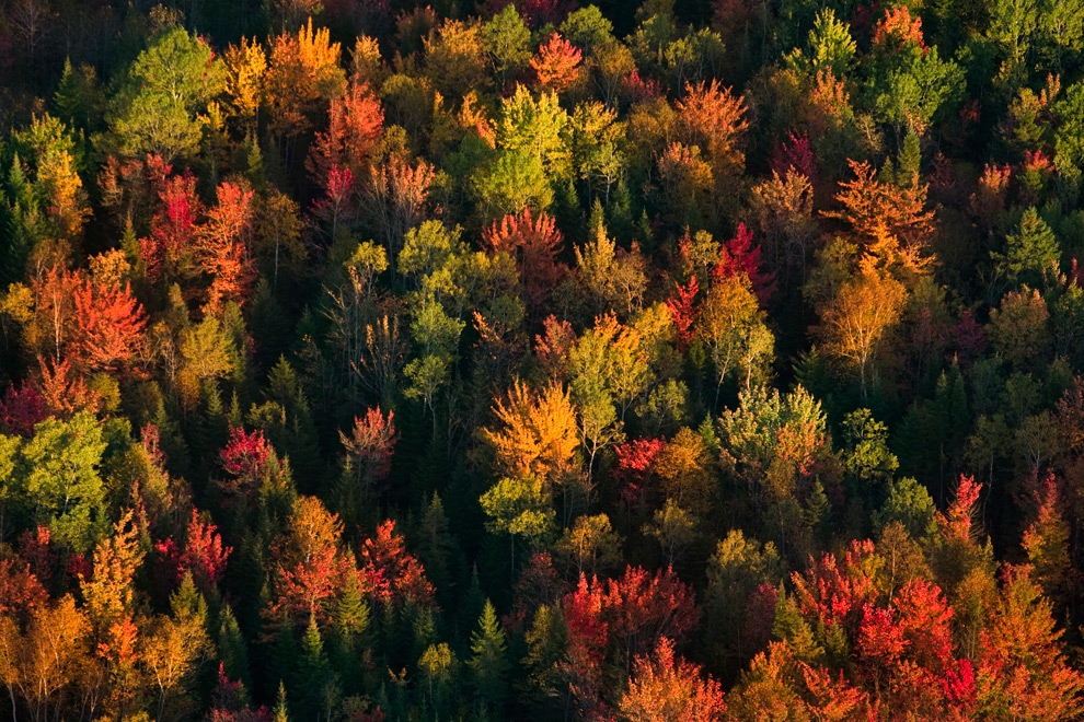 Autumn scenes photos the big picture - Pics of fall scenes ...