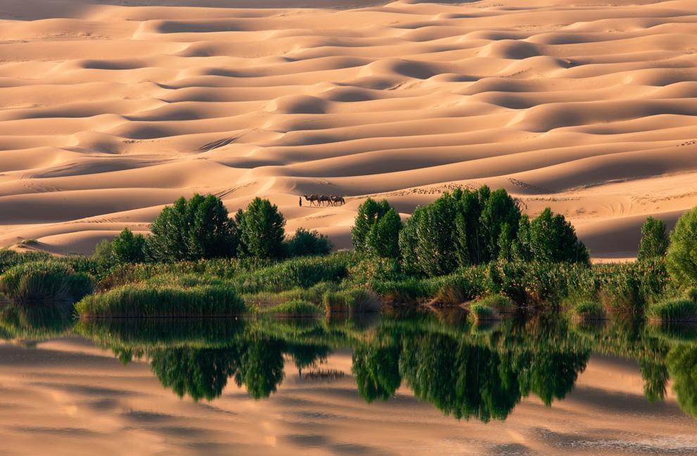 Лучшие фотографии 2010 года по версии National Geographic.